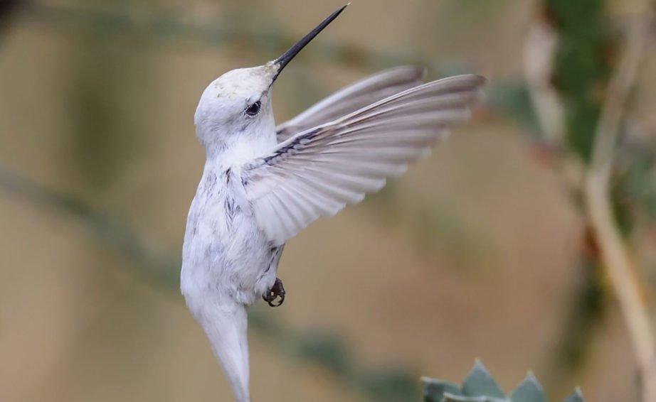 Geri Geri Uçabilen Kuş