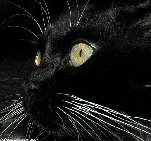 Kedi Gerçekleri